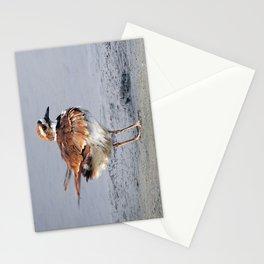 Juvenile Killdeer Stationery Cards