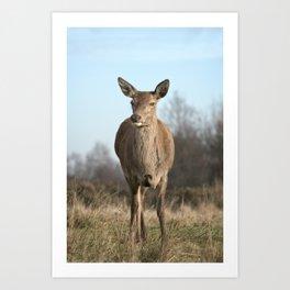 Wild Red Deer Art Print