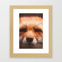 Red fox 2 Framed Art Print