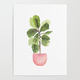 Fiddle-Leaf Fig (Watercolor) Poster