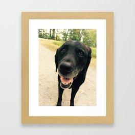 Smiling Black Lab Dog Framed Art Print