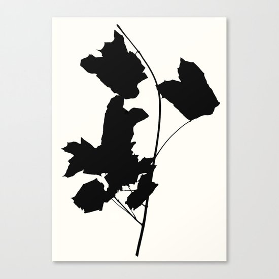 maple 1 Canvas Print