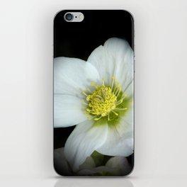 Christmas rose on black iPhone Skin