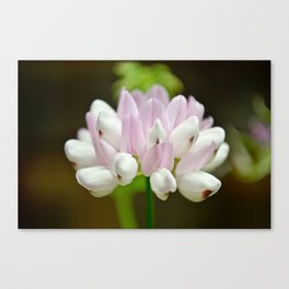 purple-flower-balance  Canvas Print