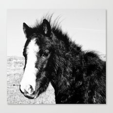 Mini Horse (2) Canvas Print