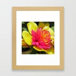 Candy Flower Framed Art Print