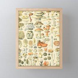 Mushroom Diagram // Champignons II XL by Adolphe Millot 19th Century Science Textbook Artwork Framed Mini Art Print