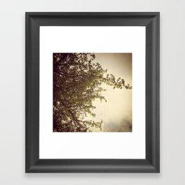 Sunlight & Branches Framed Art Print