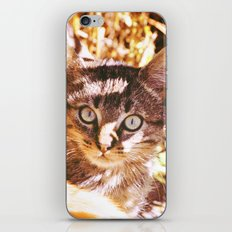 Cat in the shadows iPhone & iPod Skin