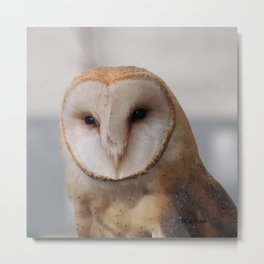 Barn Owl on Alert Metal Print