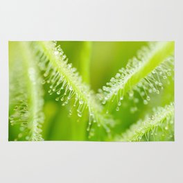 Green leaves of sundews Rug