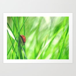 Small beetle in high grass Art Print