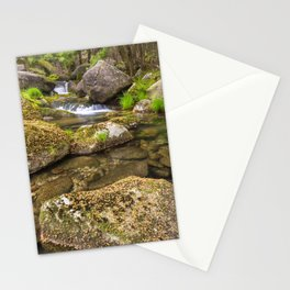 Acacia forest in autumn Stationery Cards