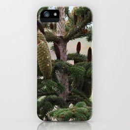 Closeup of large cones at the top of a pine tree iPhone Case