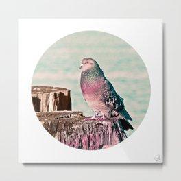 Gentleman Pigeon Metal Print