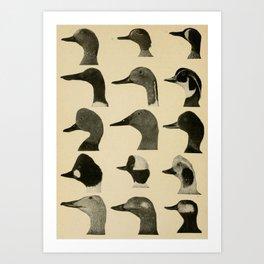 Vintage Duck Heads Art Print