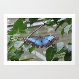 Butterfly gardens 2 Art Print