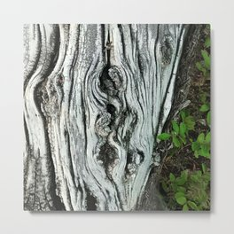 Exquisite Tree Trunk and Leaves Fine Art Photo Metal Print