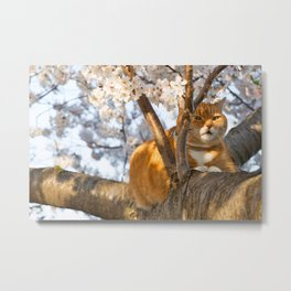 Ginger Cherry Blossom Cat Metal Print