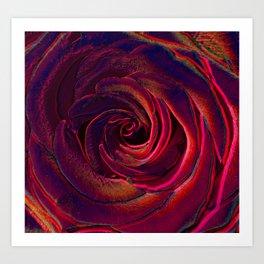 hote colors rose Art Print