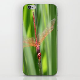 Closeup of Red Skimmer or Firecracker Dragonfly iPhone Skin