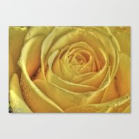 rose gold Canvas Prints featuring Gold Rose by Tracy66