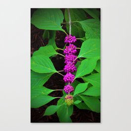 Purple Fruit Clusters Canvas Print