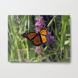 Monarch Splendor Metal Print