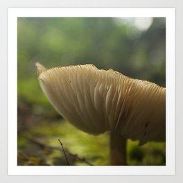 Mushroom in the Woods Art Print