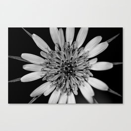 Black & White Beauty Canvas Print