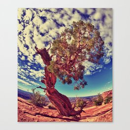 """""""Finding Sky"""" Canvas Print"""