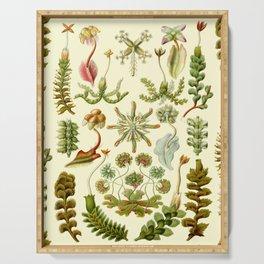 Ernst Haeckel - Hepaticae Serving Tray