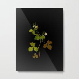 Rubus Saxatilis Mary Delany Vintage Botanical Paper Flower Collage Metal Print
