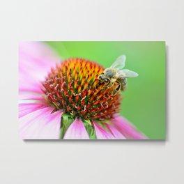 Bee on purple flower Metal Print