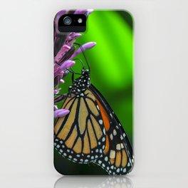 Monarch Butterfly on Purple Flower Fine Art Photograph  iPhone Case