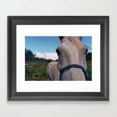 Colorado Mare Framed Art Print
