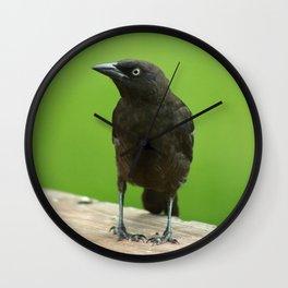 Black Bird Common Grackle Wall Clock