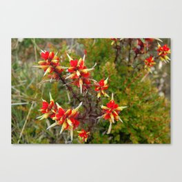 Bright Red Flowers on Top of Irazú Volcano, Costa Rica Canvas Print
