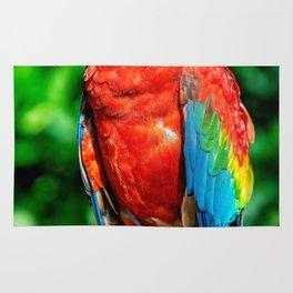 Amazon Parrot Rug