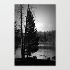 Tree on the Yellowstone Canvas Print