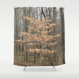 Beautful tree in John Heinz Wildlife Refuge Shower Curtain