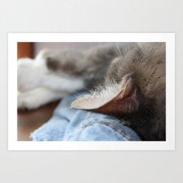 Cozy Cat Poster Art Print