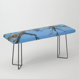 Treehuggers Bench