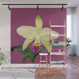 Stunning cream and magenta orchid flower Wall Mural