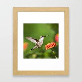 Beautiful Hummingbird Framed Art Print
