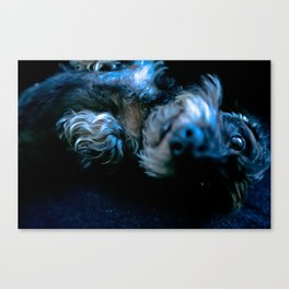 DACKEL DOG #36 Canvas Print