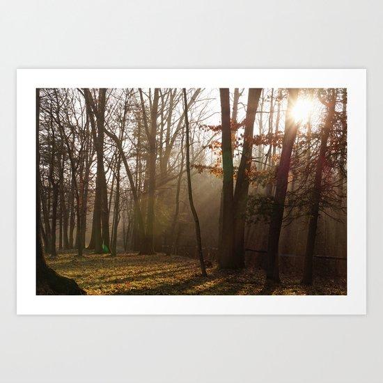 Sunlit Morning Art Print