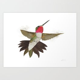 Broad-tailed Hummingbird Art Print