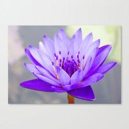 Blue Lotus In Bloom Canvas Print