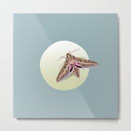 The Moon Moth Metal Print